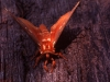 mothra_resized